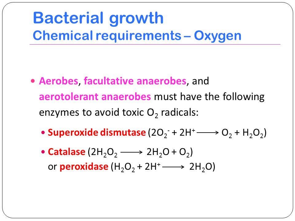 bacterial growth requirements 1949] growth requirements of bacterial viruses 5 1 1 of bacterial ofin 1 + + + + + + + + + + and growth the is we growth.