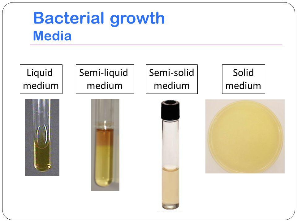 Bacterial growth Media