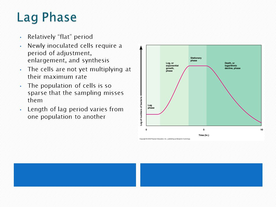 Lag Phase Relatively flat period