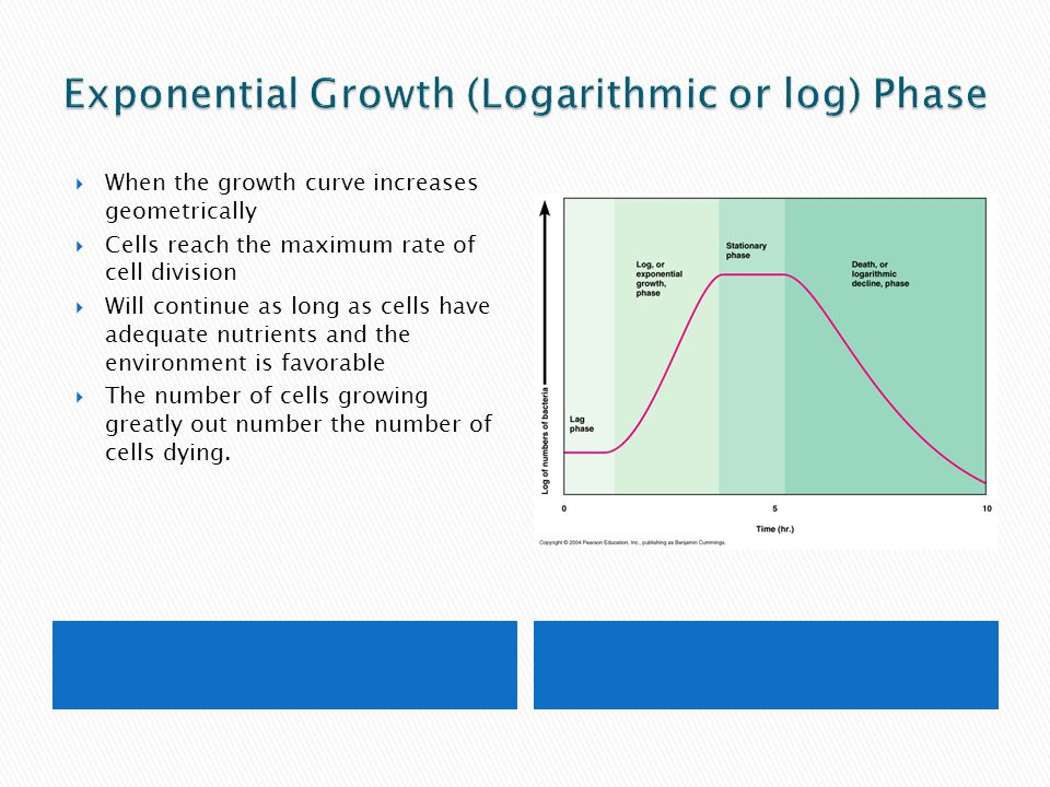 Exponential Growth (Logarithmic or log) Phase