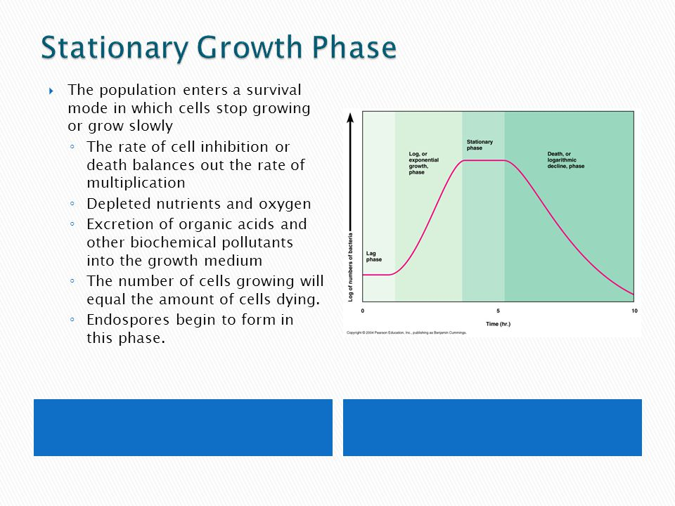 Stationary Growth Phase