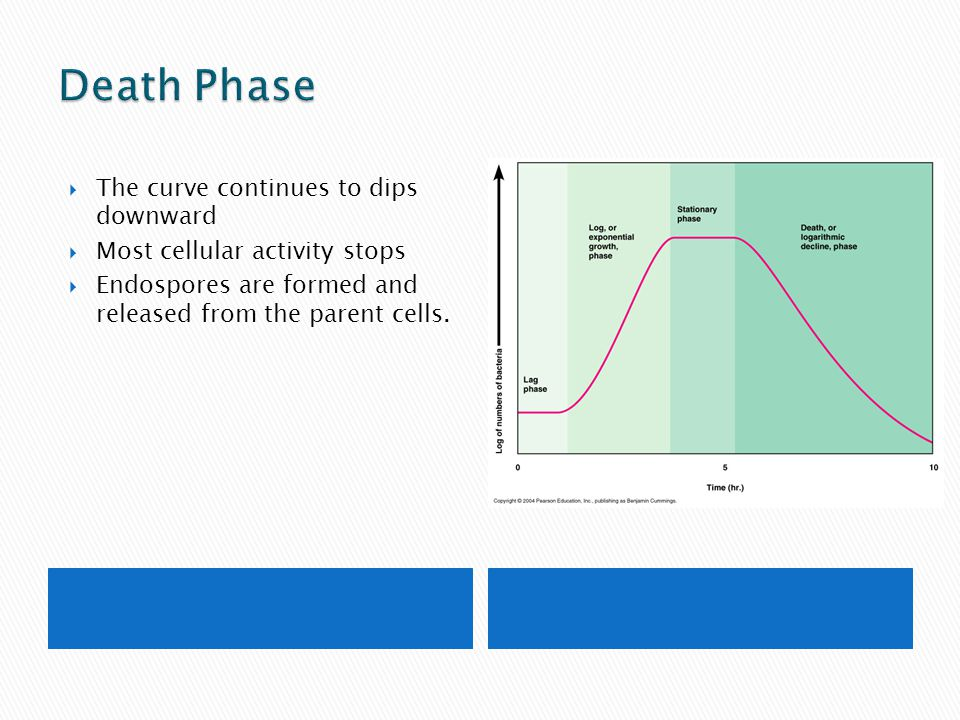 Death Phase The curve continues to dips downward
