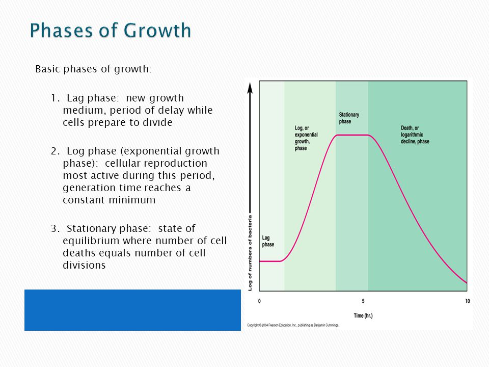 Phases of Growth Basic phases of growth: