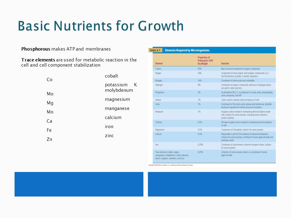 Basic Nutrients for Growth