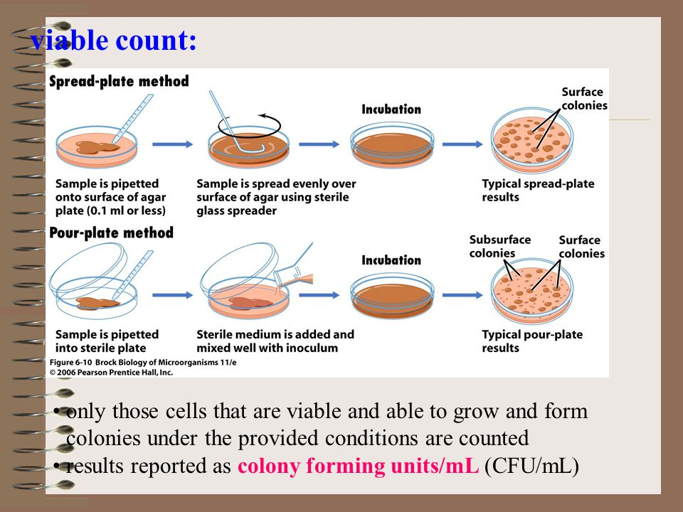 viable count: only those cells that are viable and able to grow and form colonies under the provided conditions are counted.