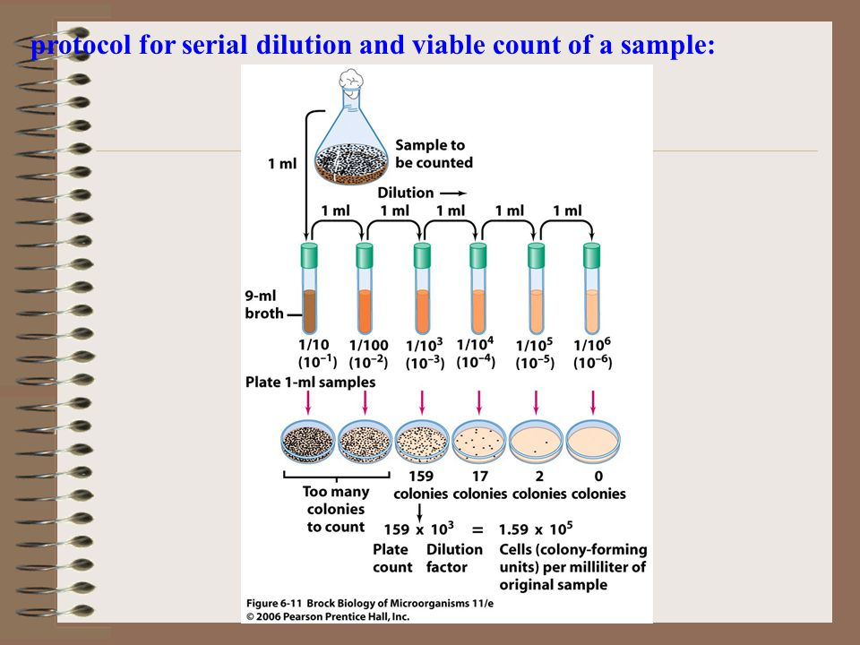 protocol for serial dilution and viable count of a sample: