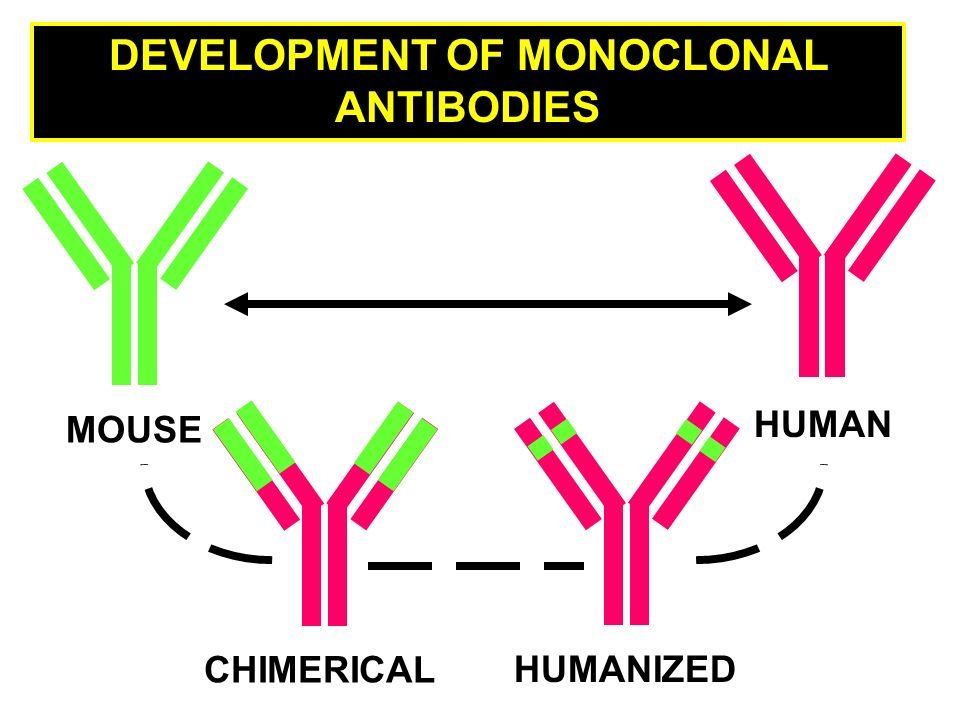 DEVELOPMENT OF MONOCLONAL ANTIBODIES