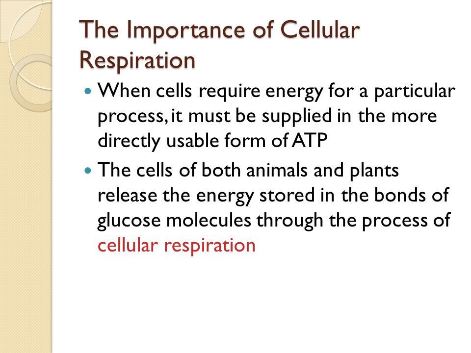 Cellular Respiration Chapter 7.1 Pages ppt download