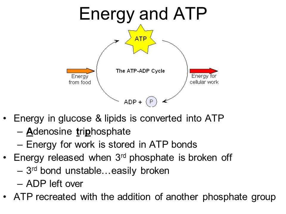 sugar found in adp and atp relationship