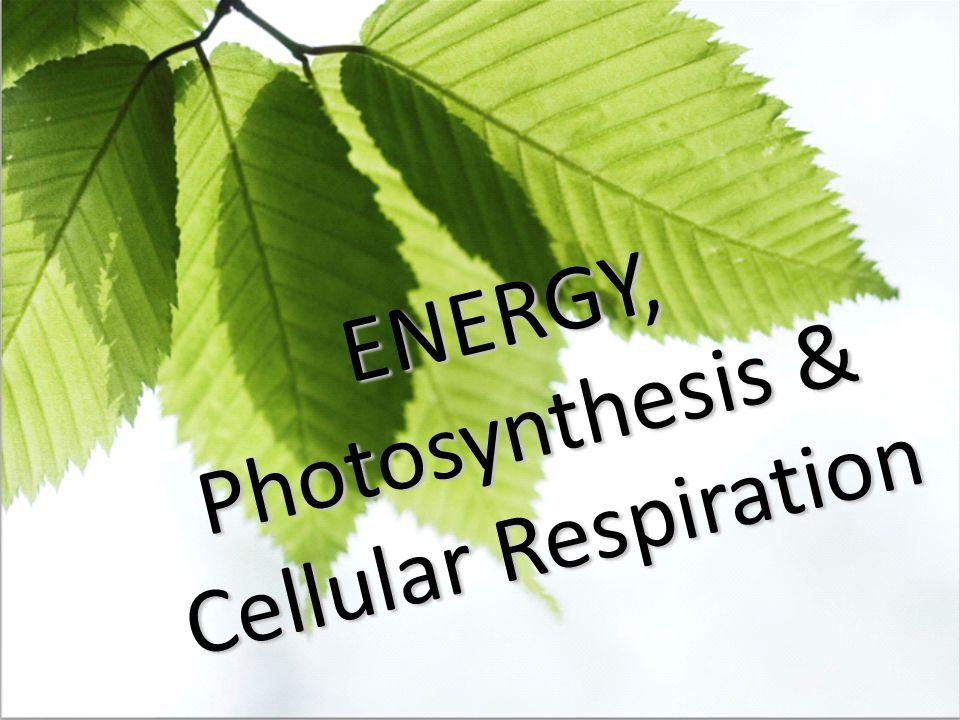 ENERGY, Photosynthesis & Cellular Respiration