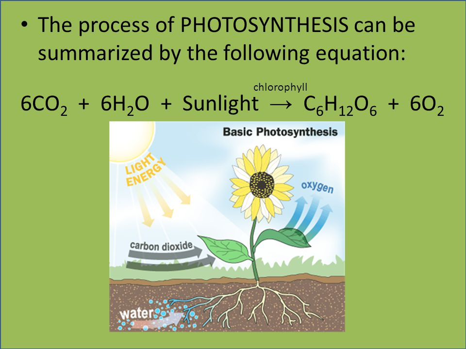 6CO2 + 6H2O + Sunlight → C6H12O6 + 6O2