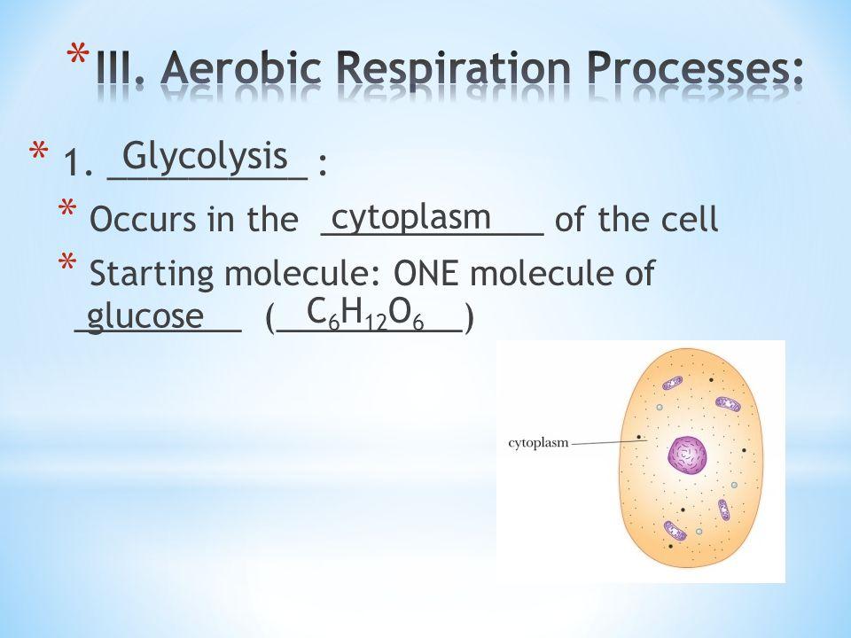 III. Aerobic Respiration Processes:
