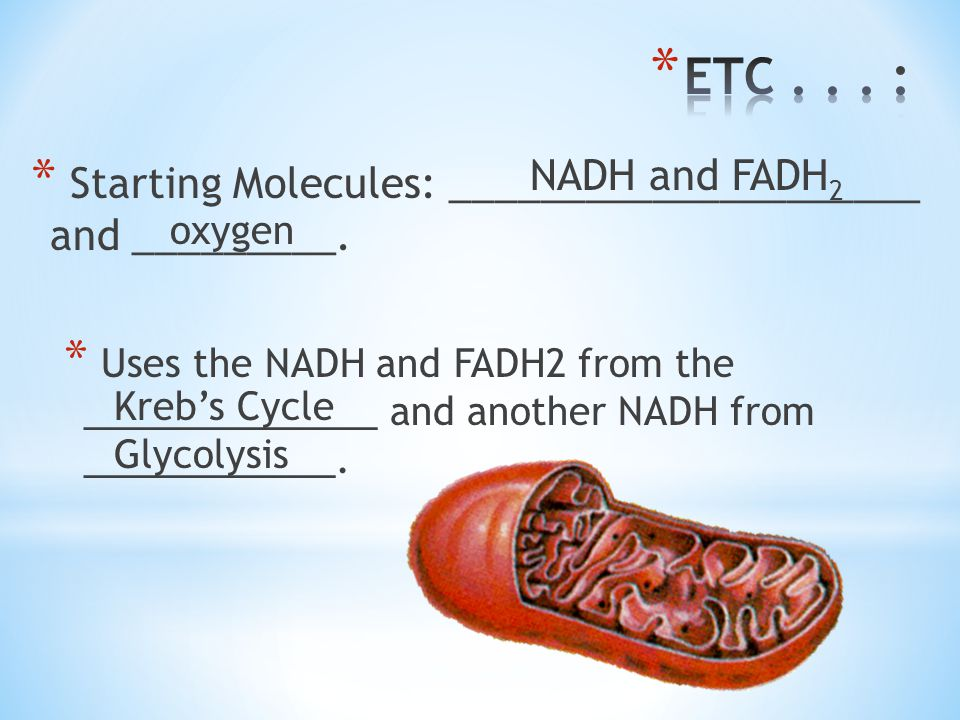 ETC . . . : NADH and FADH2. Starting Molecules: _____________________ and _________.