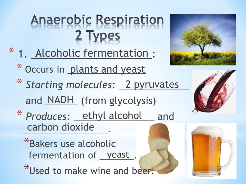 Anaerobic Respiration 2 Types