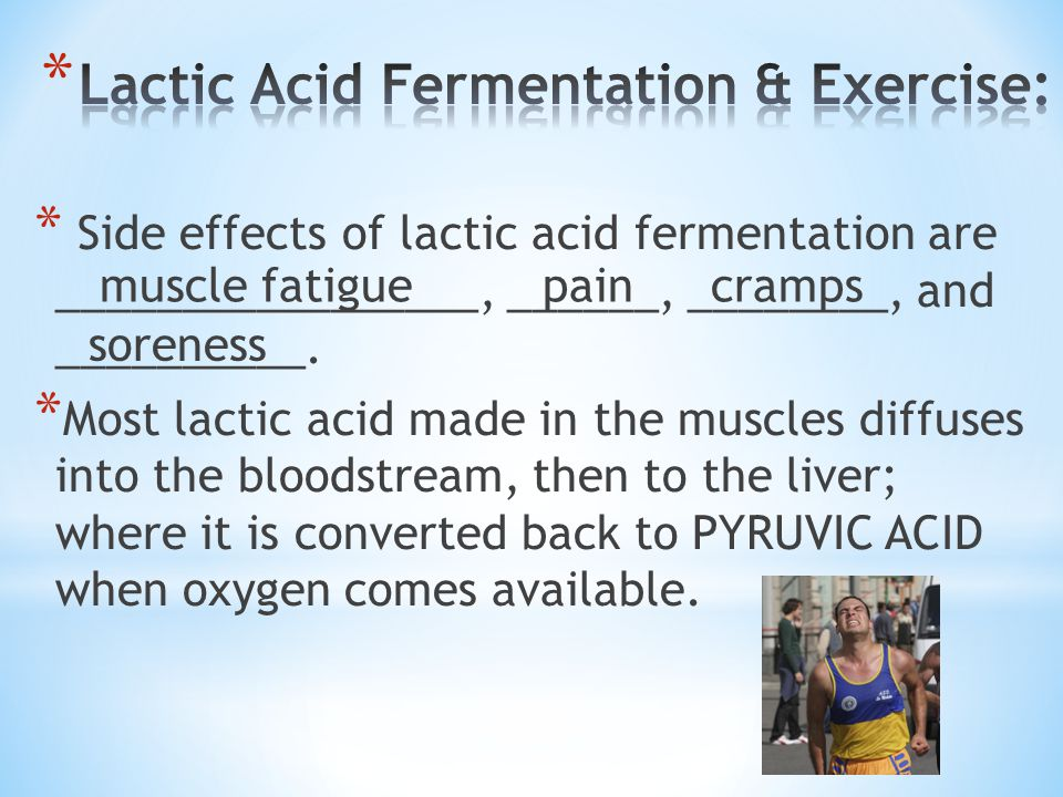 Lactic Acid Fermentation & Exercise:
