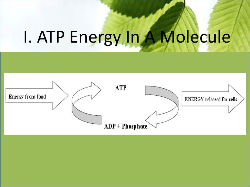 I. ATP Energy In A Molecule