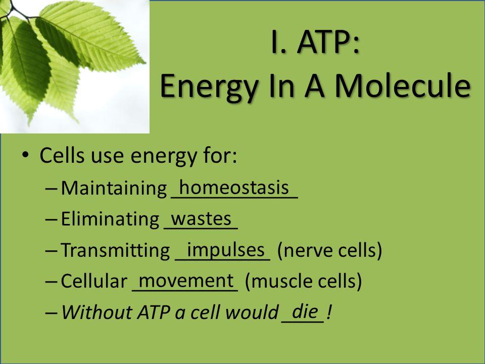 I. ATP: Energy In A Molecule