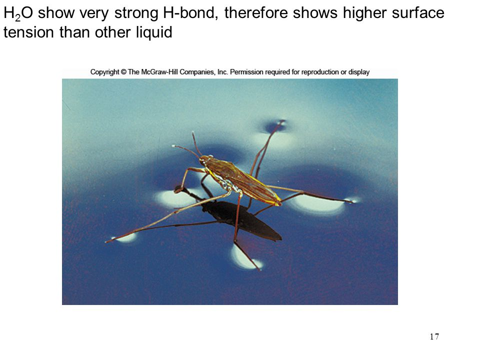 H2O show very strong H-bond, therefore shows higher surface tension than other liquid