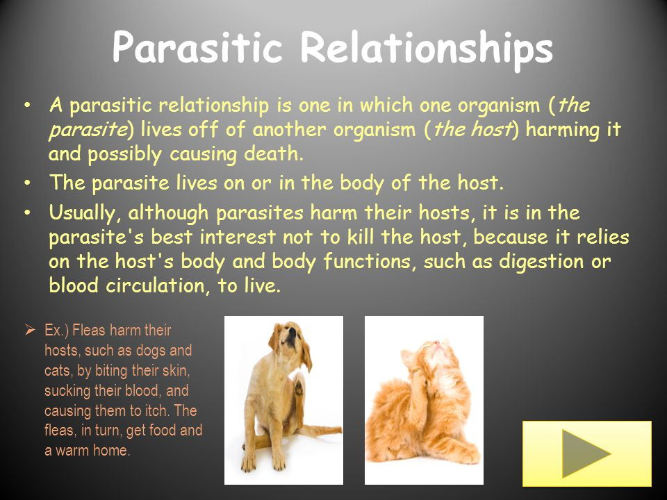 pictures of parasites and hosts relationship