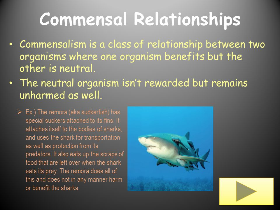 what does commensal relationship mean and median