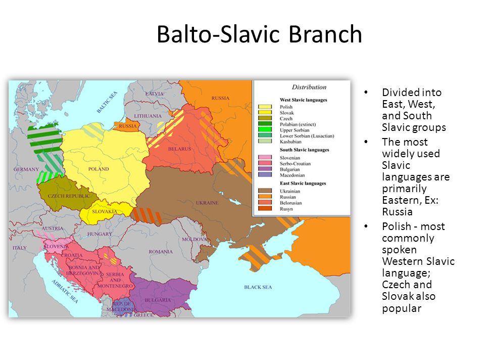 Balto-Slavic Branch Divided into East, West, and South Slavic groups