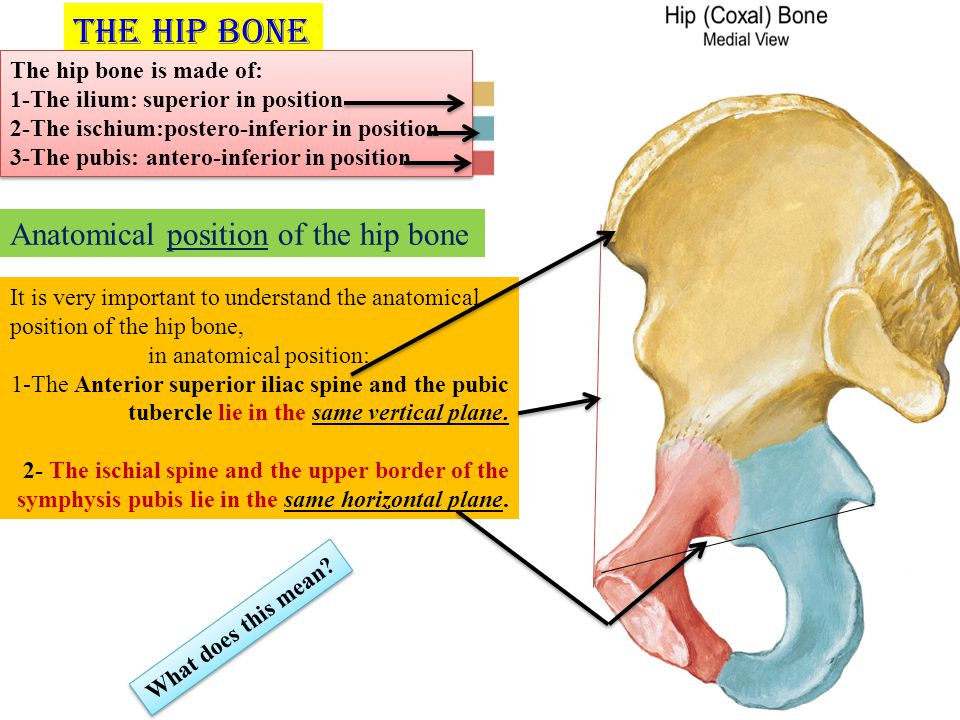 Bones Of The Gluteal Region Ppt Video Online Download