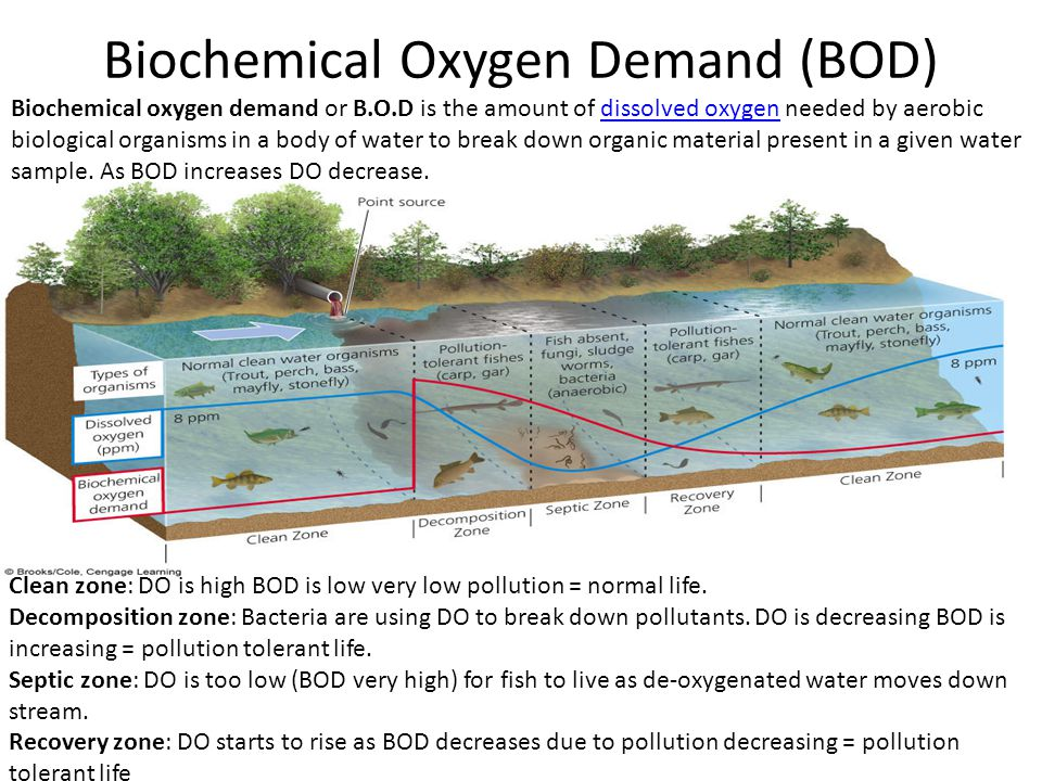 biochemical oxygen demand The amount of dissolved oxygen needed to decompose the organic matter in  waste water: a high bod indicates heavy pollution with little oxygen remaining for .