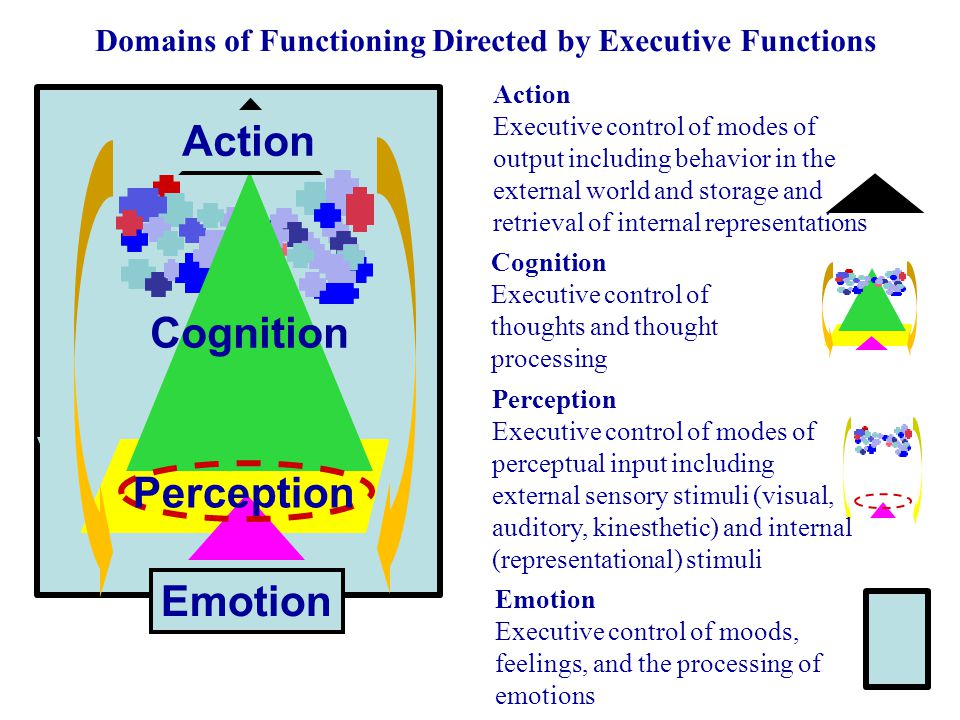 perception cognition and emotion Perception, cognition, and emotion 1 understand the important role played by perceptions, cognitions, and emotions in negotiation.