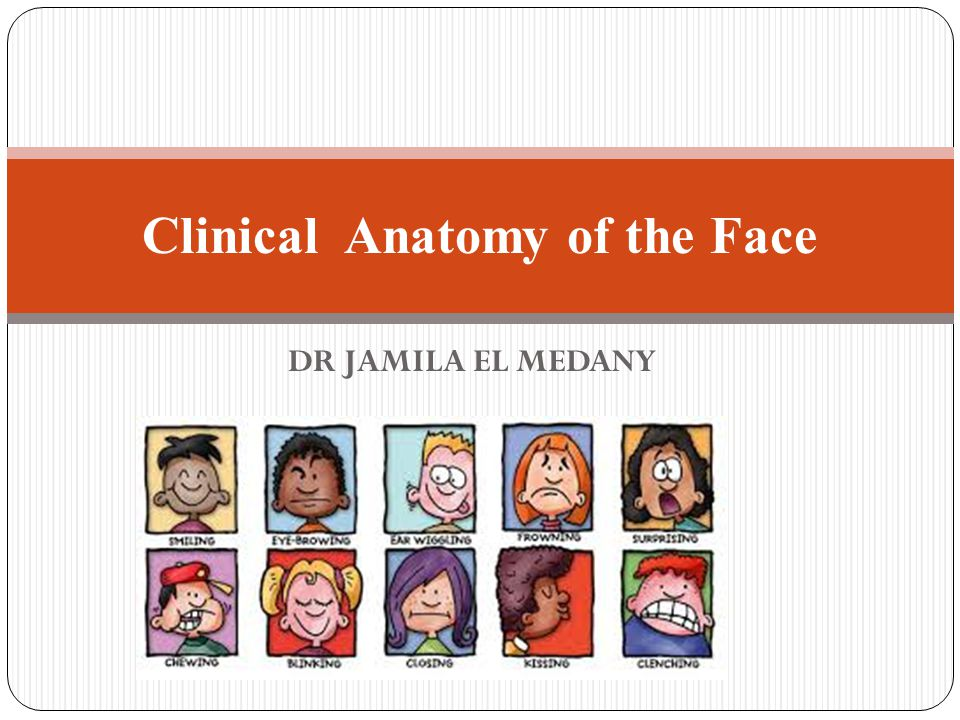 Clinical Anatomy Of The Face Ppt Video Online Download