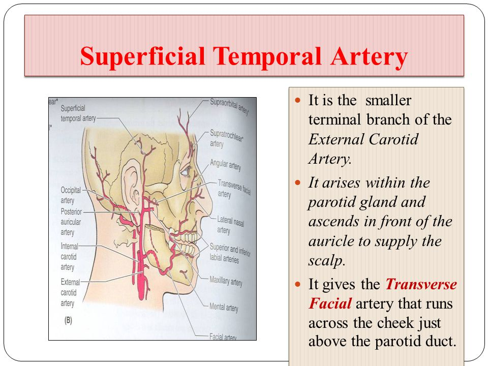 Superficial temporal artery anatomy 989030 - follow4more.info