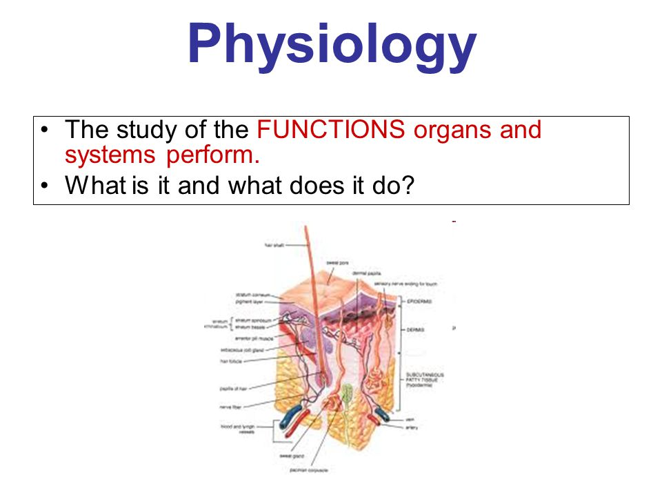 Colorful Great Ways To Learn Anatomy And Physiology Festooning ...