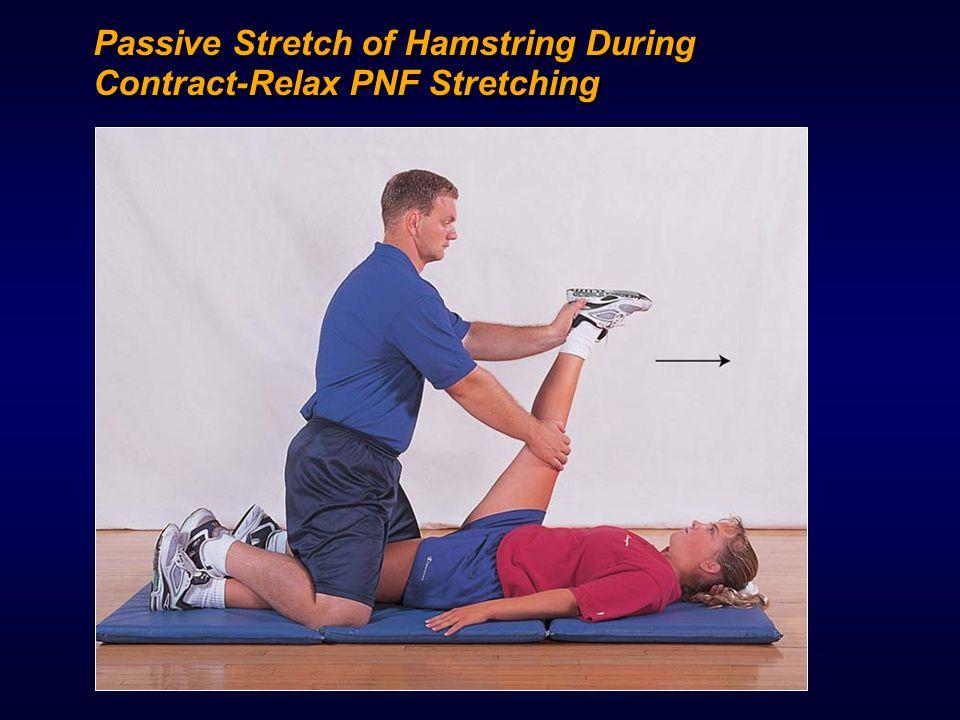1 6 C H A P T E R Stretching and Warm-Up. - ppt video ...