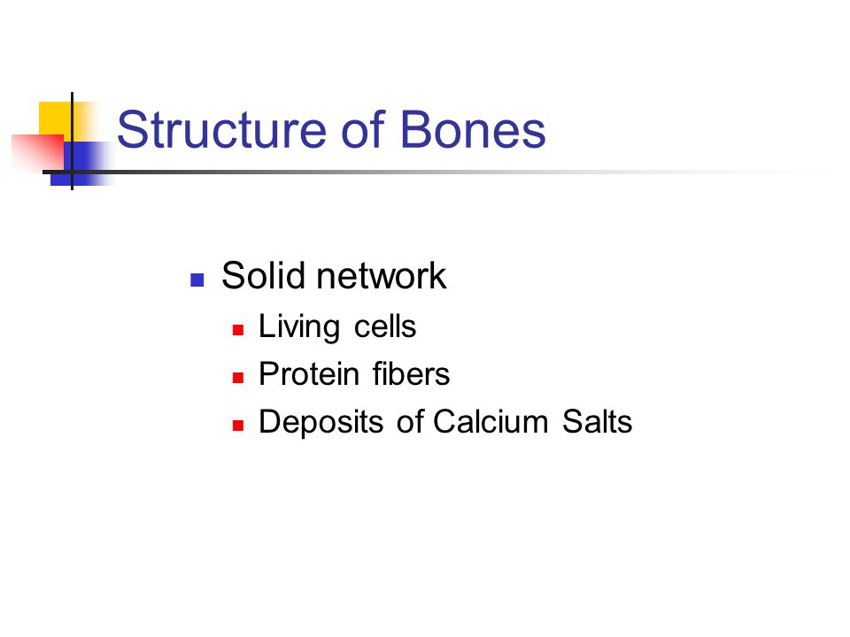 Structure of Bones Solid network Living cells Protein fibers