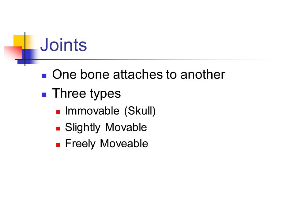 Joints One bone attaches to another Three types Immovable (Skull)