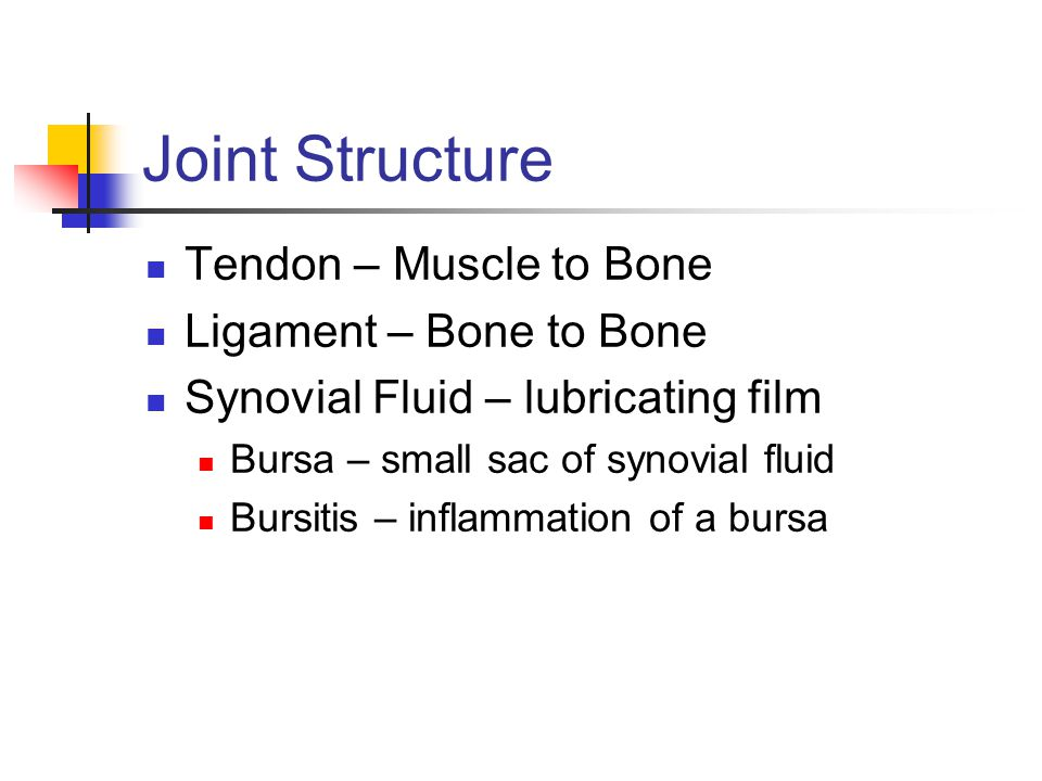 Joint Structure Tendon – Muscle to Bone Ligament – Bone to Bone