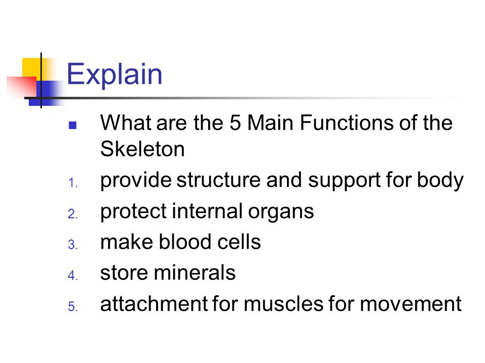 Explain What are the 5 Main Functions of the Skeleton