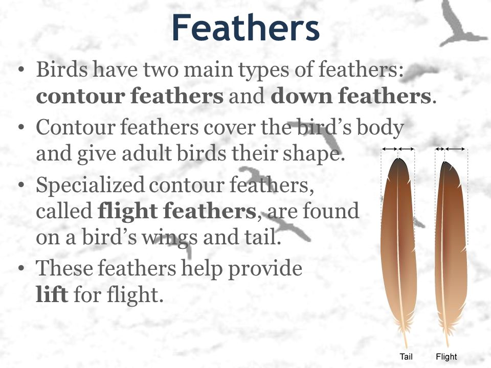 Types of bird feathers