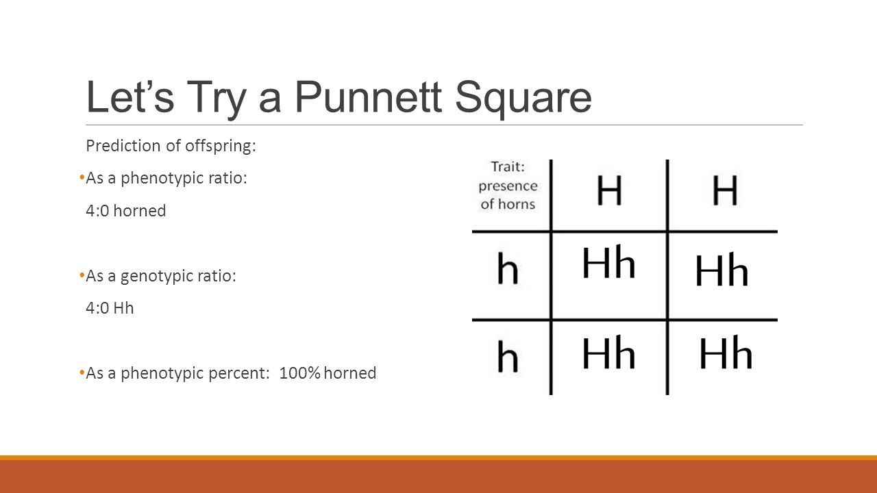 Mendelian Genetics and Punnett Squares - ppt video online ...