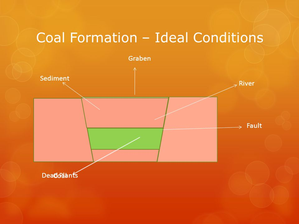 Coal Formation – Ideal Conditions