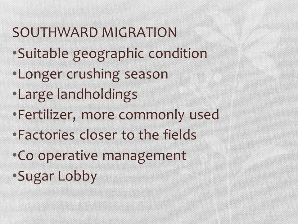 SOUTHWARD MIGRATION Suitable geographic condition. Longer crushing season. Large landholdings. Fertilizer, more commonly used.