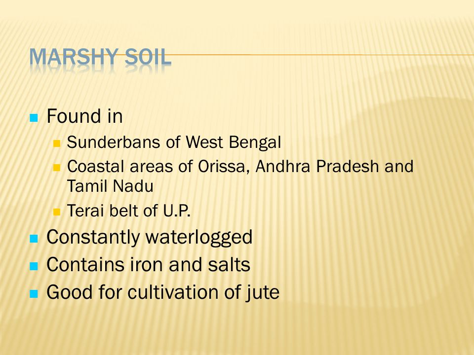 Marshy Soil Found in Constantly waterlogged Contains iron and salts