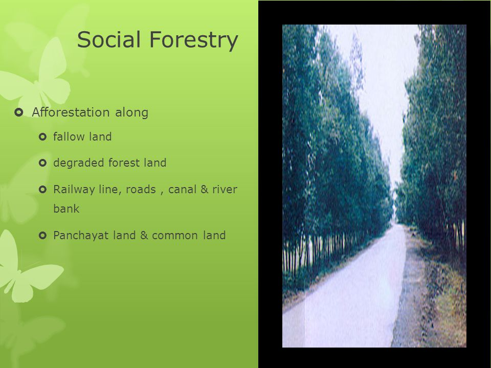 Social Forestry Afforestation along fallow land degraded forest land