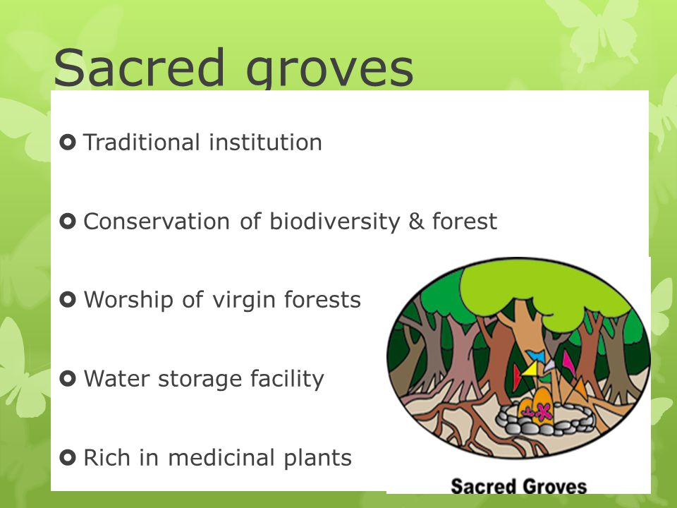 Sacred groves Traditional institution