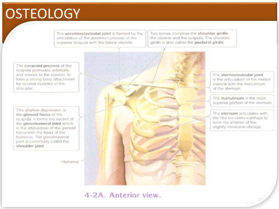 biomechanics of the shoulder