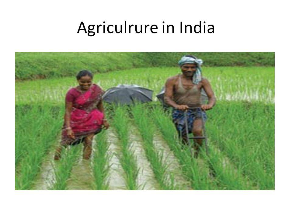 Agriculrure in India