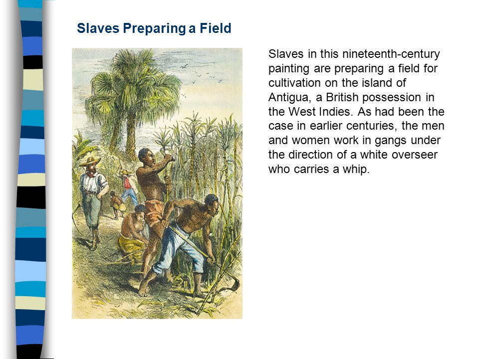 Middle passage chapter ppt video online download for Case in stile british west indies
