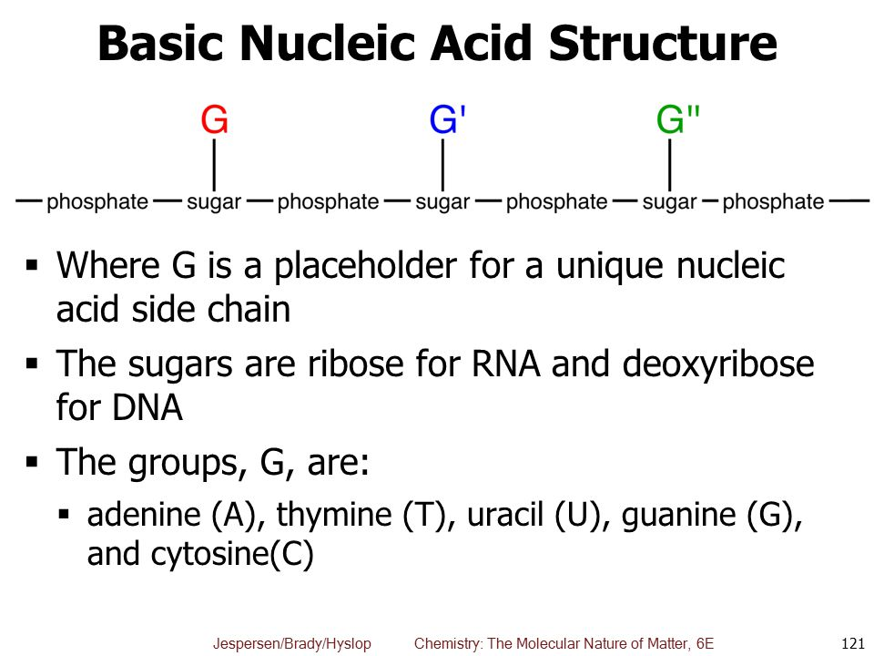 Basic Nucleic Acid Structure