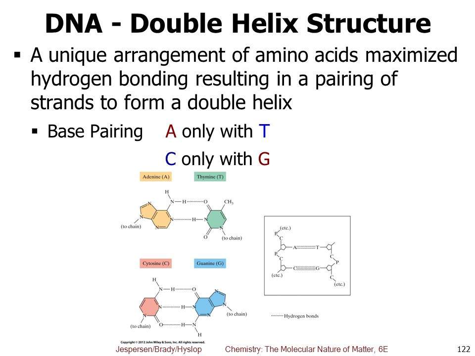 DNA - Double Helix Structure