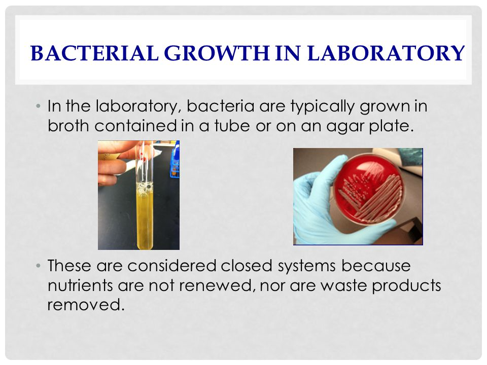 bacterial growth lab Despite the fact that bacteria are growing all around you, they can be surprisingly difficult to grow in a lab this lesson will explore some of.