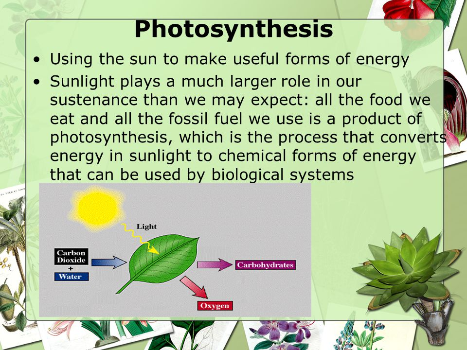 Photosynthesis Using the sun to make useful forms of energy - ppt ...